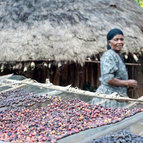 Ethiopia Guji Natural Process